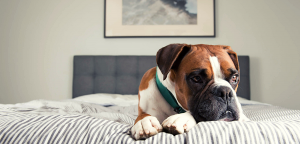 9 Warning Signs That Your Dog Is In Pain