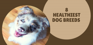 8 of the Healthiest Dog Breeds