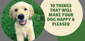 Top 10 Things That Will Make Your Dog Happy & Pleased