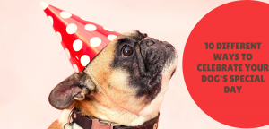 10 Different Ways to Celebrate Your Dog's Special Day