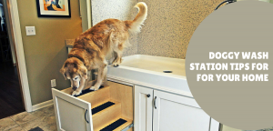 Doggy Wash Station Tips For For Your Home