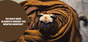 Do Dogs Need Blankets During the Winter Months?